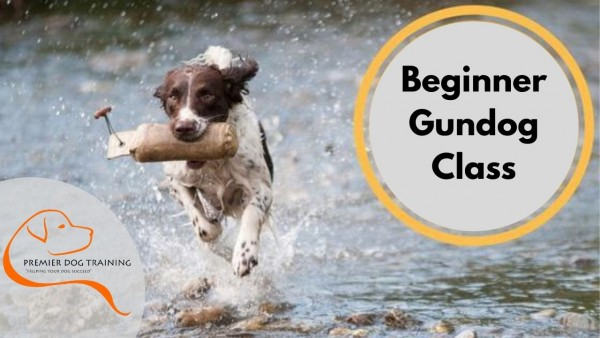 Beginner Gundog Training Class