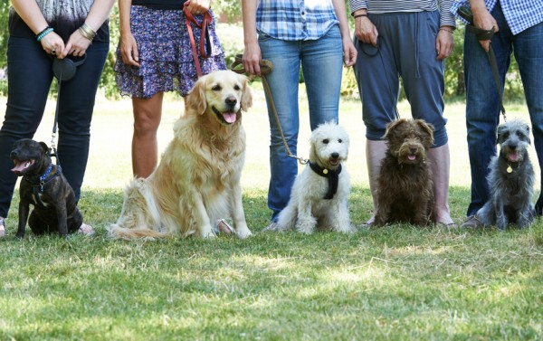 Beginner Grade Dog Training Class